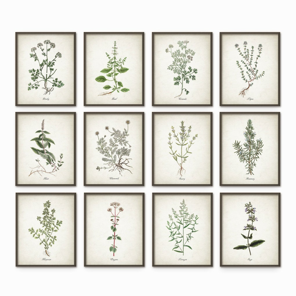 kitchen herbs wall art print set of 12 vintage botanical. Black Bedroom Furniture Sets. Home Design Ideas
