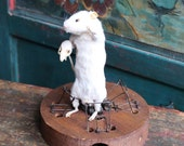 Halloween Humor Vintage Mousetrap Taxidermy Mouse Holding Skull EeeK