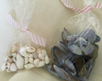 Beautiful Blue Mussel & Mostly White Periwinkle Shells - 40 Pieces of Each - DIY Crafting