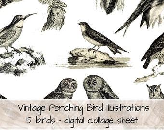 Vintage Perching Bird B&W Illustrations 0122