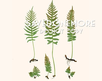 Vintage Botanical Fern Print Instant Download Make Your Own Art {Fern 1}