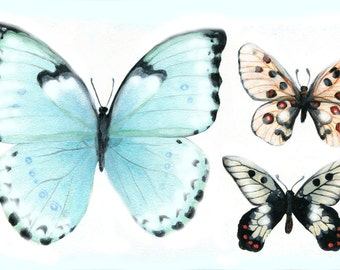 Blue Butterfly Placemat, Set of Two, 12 x 18