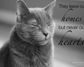 Sympathy Card - Pet Loss Sympathy - Cat Angel - Pet Sympathy Card - Cat Sympathy Card - Pet Loss Card - Pet Memorial Card