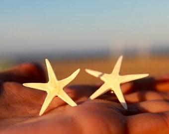 Real starfish, earrings starfish, jewelry starfish, real starfish earrings, mermaid earrings