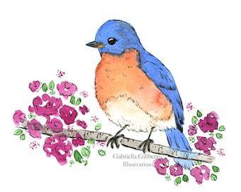 Northeastern Bluebird