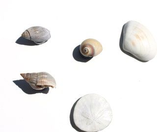 Natural Sea Shell Magnets (5), Beach magnet, nautical magnet, ocean magnet, Nautical Kitchen, Ocean kitchen, Beach kitchen, Real Shell