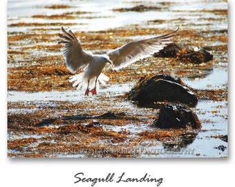 Seagull Landing - Fine Art Photography, Archival Photo Print, 5x7, 8x10, A6 Stationery