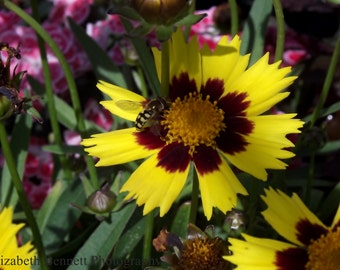 Flower, Yellow, Nature, Photography