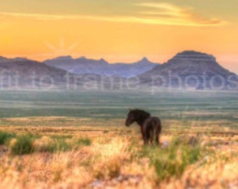 Wild Horse Evening