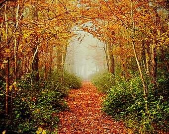 Alabama Decor, Fog Photography, Colorful Autumn Landscape, Nature, Trees, Woods, Forest, Trail, Hiking, Fall Photography, Orange, Blue