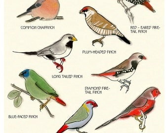 "Bird wall art - Bird Decor - Bird Artwork - Education print Ten Finches Print - 8.3"" X 11.8"" - 4 for 3 SALE"