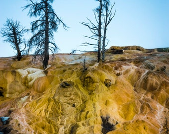 Mammoth Hot Springs Yellowstone Abstract Nature Landscape Photo Montana Yellow Landscape Wyoming Wall Art nat149