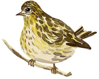 bird print archival giclee woodland watercolour illustration painting art eeliethel paper scandinavian nordic eurasian siskin