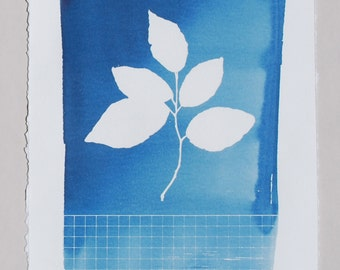 Botanical print, cyanotype, pressed leaf art, cottage chic decor