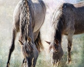 """Horse Photography - """"Grazing on Light and Freedom"""" - nature photograph, animal, stallion, wild horses, unframed print"""