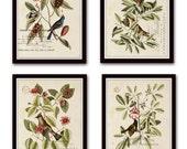 Vintage Bird and Botanical Print Set No.1 - Giclee Canvas Art Prints - Antique Botanical Prints - Wall Art - Prints - Posters - Mark Catesby