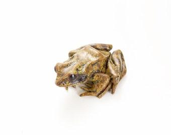 European common frog - Bronze, natural colouring (small)