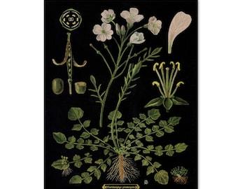 Botanical Print, Botanical Chart, Botanical Poster, Floral Wall Art, Mother's Day Gift, Bright Flowers on Vintage Black