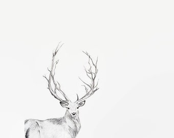 Deer Print, Ink Drawing, Deer art, Buck print, Buck art, Deer Ink Print, Boho Decor, Deer Illustration, Deer Artwork, Deer Drawing, Woodland