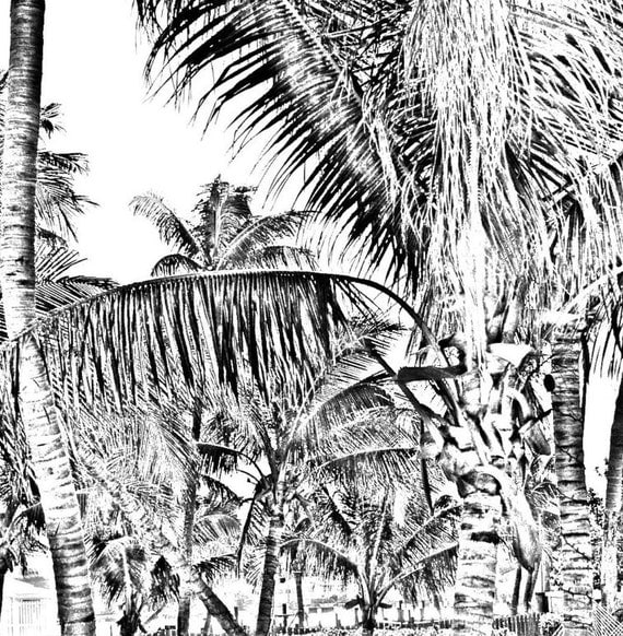 Coconut Palm Gray Scale Tree Digital Download