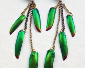 Beetlewing earrings, Aurora Beetle Elytra Dangle Earrings