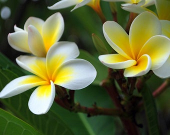 Custom Intuited Flower Essence Blend