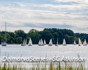 Sailing on the Chester River