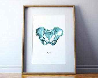 Blue Pelvis Art - Pelvis Watercolor - Pelvis Print - Medical Art