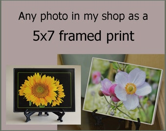 Framed Photograph Any 5x7 Print, Affordable Gift Item, Gift for Men or Women, Pick Any 5x7 photo as a framed print,Wall Art, Home Decor