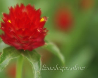 Spiky red flower - Nature photography print