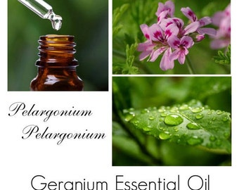 Geranium Oil, Geranium Essential Oil, Rose Geranium Essential Oil