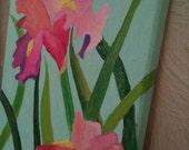 Pretty in Pink Iris
