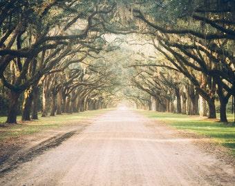 Photography, Savannah, GA, Wormsloe, Live Oak Photography, Savannah Photography, Live Oak Fine Art Print, Live Oak Wall Decor, Spanish Moss