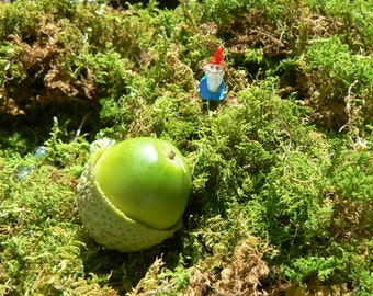 Tiny gnome