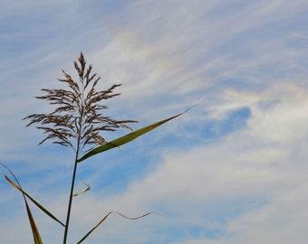 Tall Grass - nature, outdoors, sky, blue