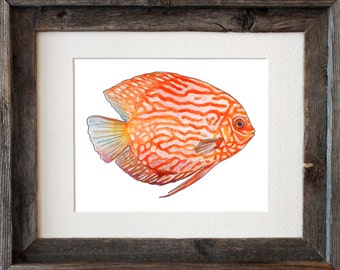 Orange Discus Fish Watercolor Fine Art Print