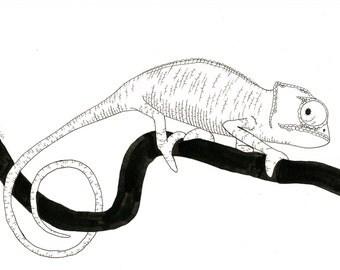chameleon ink illustration 2
