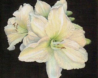 White daylilies Giclee Print