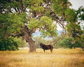 Texas Hill Country, Donkey by a Tree , Landscape, Texas Hill Country Decor, Farm Animal