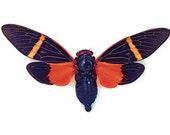 OVERSTOCK: spread Tosena paviei orange real Cicadas