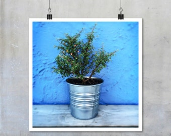 Rustic Chic Plant Pot Photo tin pot small plant blue wall nature garden art big print poster cottage style rustic chic wall art home decor