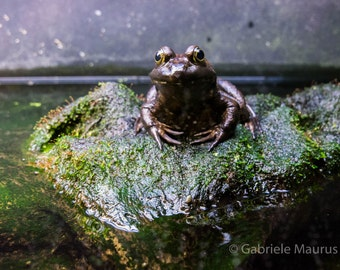 Nautical photography  Vancouver Aquarium  Misplaced my crown... //  instant download / jpg file / home decor / wall art / frog