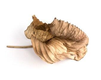 Botanical sculpture / Hosta Leaf 2 //  instant download / jpg file / home decor / wall art / leaf sculpture