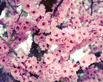 Pink spring flowers cherry blossoms nursery wall art nature photography 'Full Bloom'