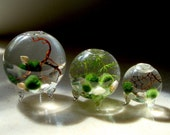 Zen. Set of 3. Tiny Orbs. Marimo Ball. Ecosphere.Terrariums