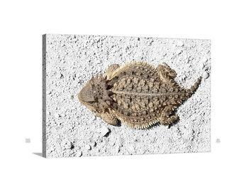 Horny Toad, Reptile Art, Canvas Art Print, Horned Lizard, Photo Print, Lizard Picture, Wildlife Photography, Animal Art, Photo on Canvas