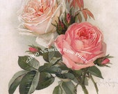 Bride and Pink Cabbage Roses Print Paul de Longpre Pink Rose Shabby