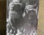 SALE !!! Antique Postcard. From my album Cats and Kittens. Real Photo. 1960 era