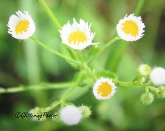 Yellow, White, Wildflowers, Stilesville, Indiana, Fine Art, Print, Photography, 8 x 10, Glossy, OOAK