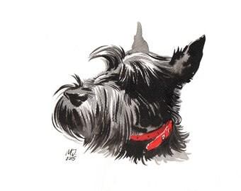 Scottish Terrier head portrait original ink painting